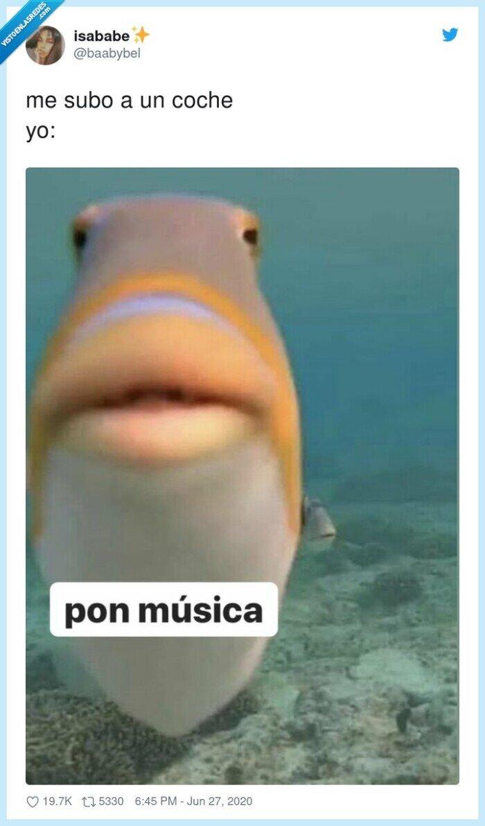 coche,música,pez,subirse