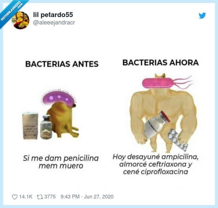bacterias,cheems,doge