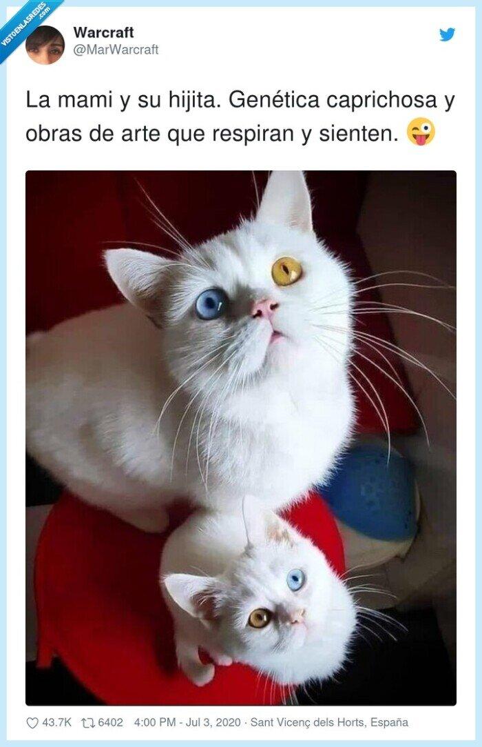 colores,gatos,genética,ojos