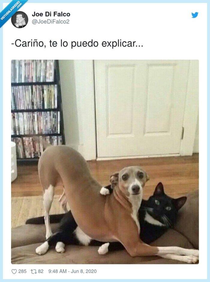 cariño,gato,mascota,perro,pillada