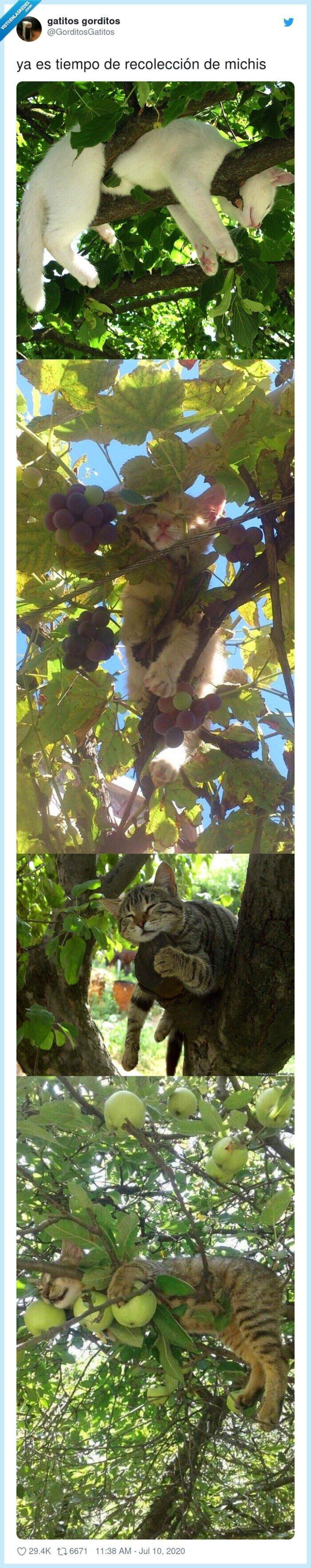 gatos,michis,recolección,tiempo