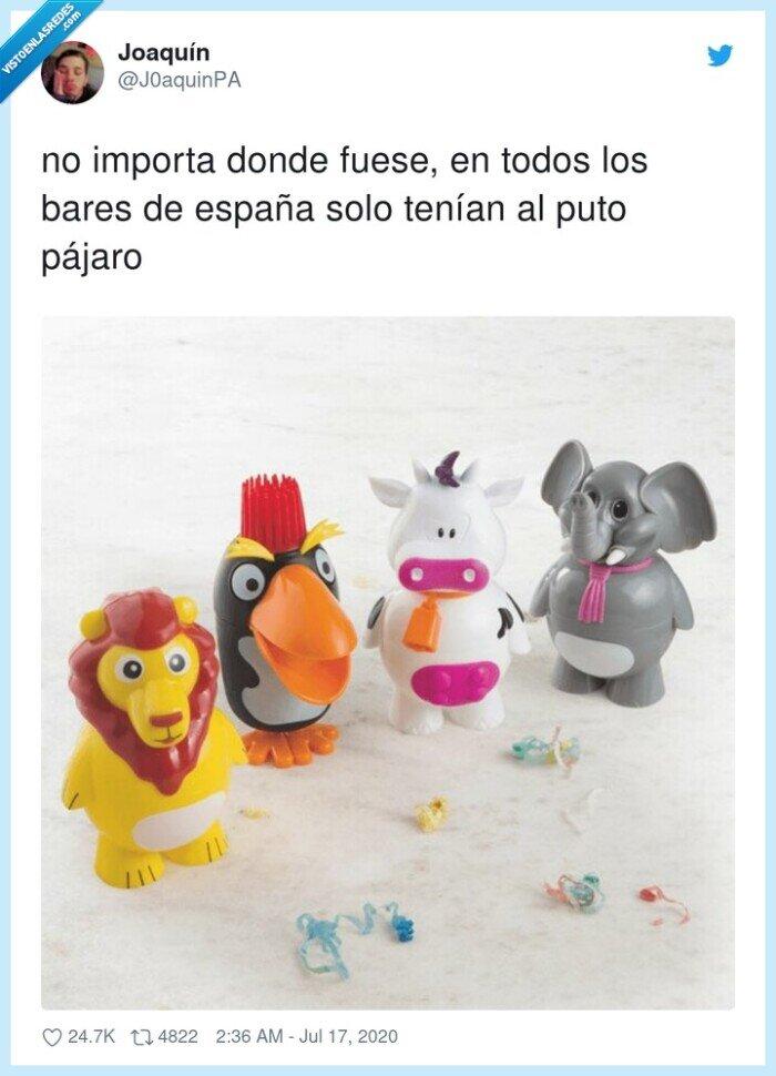 españa,helados,pájaro,pingüino
