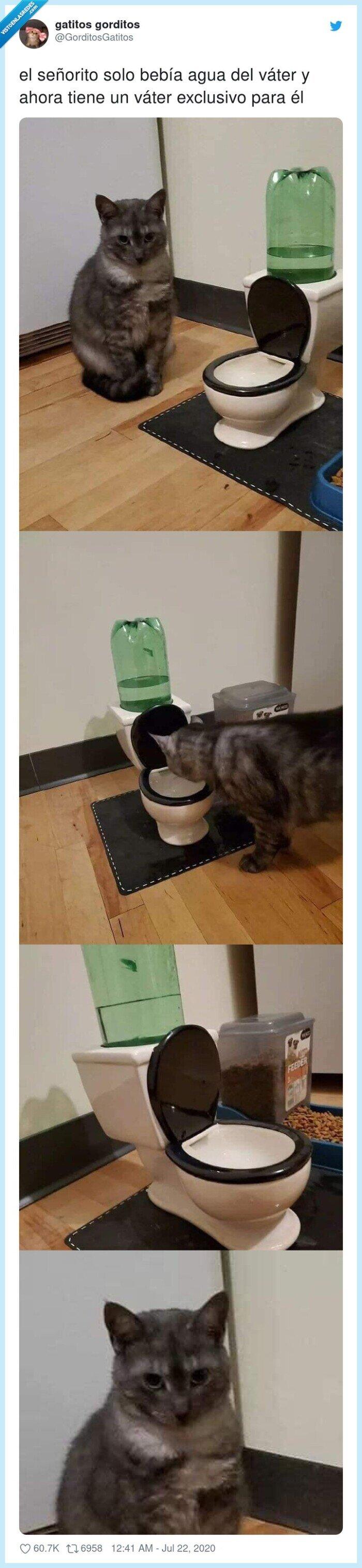 agua,gato,lavabo,necesidades,váter,wc