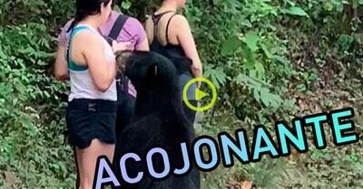 637860 - ¿Cómo reaccionar cuándo te aborda un oso de sopetón? Esta chica lo demuestra y encima acaba sacándose un selfie