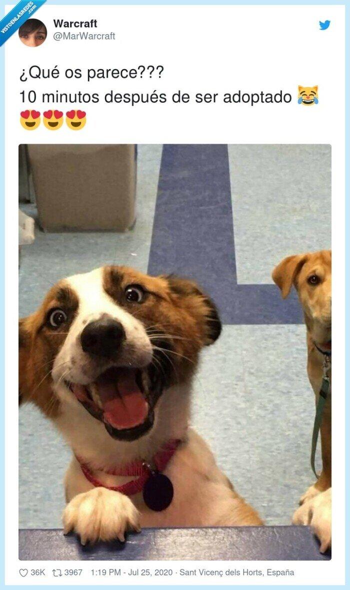 10.minutos,adopción,perro