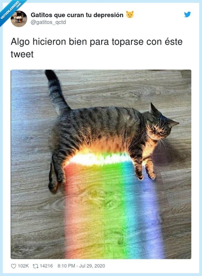 arcoiris,gato,real