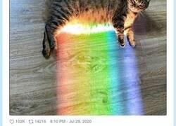 Enlace a  El gatito arcoiris existe en carne y hueso