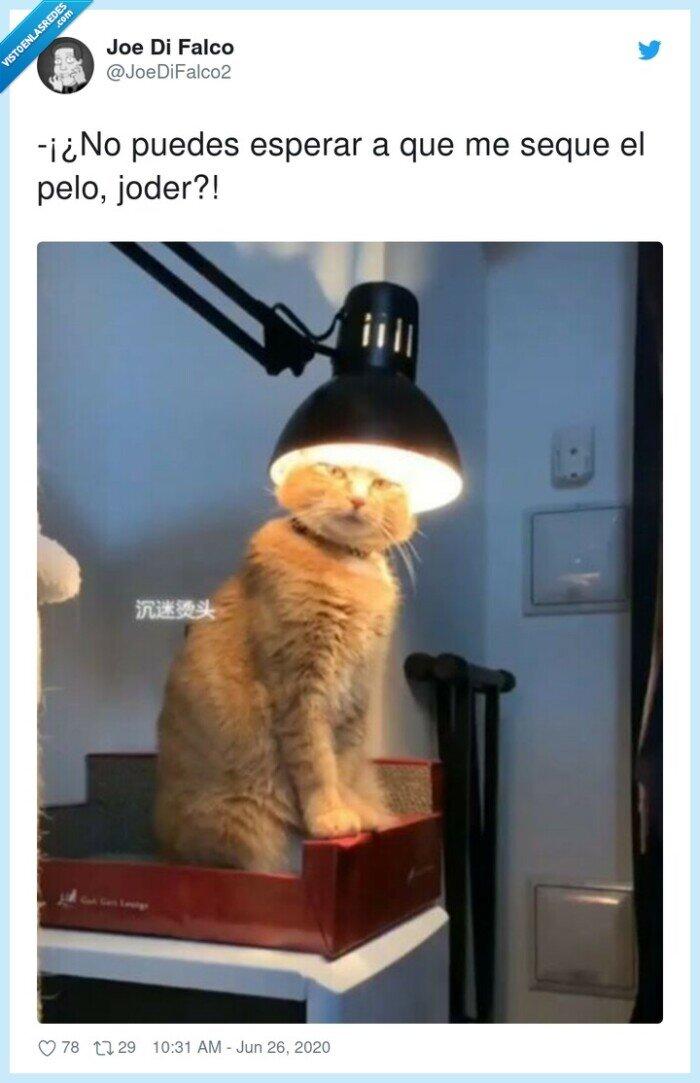 esperar,gato,pelo,secar