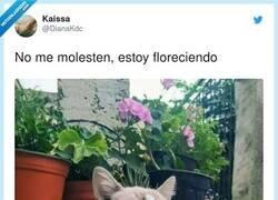 Enlace a Qué cosita más bonita haciendo la gatosíntesis, por @DianaKdc