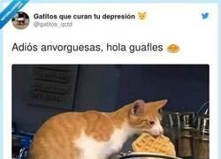 Enlace a Cambio de dieta, por @gatitos_qctd