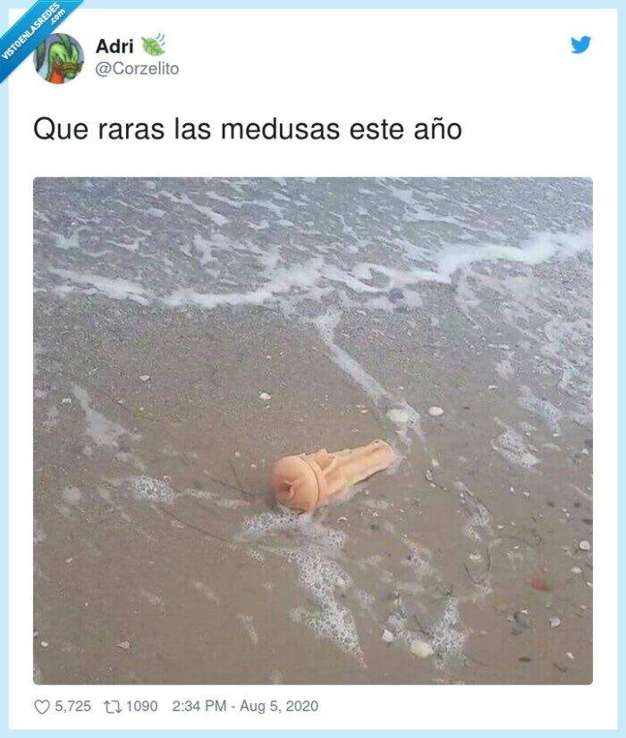 medusas,playa,raras