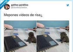Enlace a Ni un día sin un post de gatitos adorables , por @GorditosGatitos