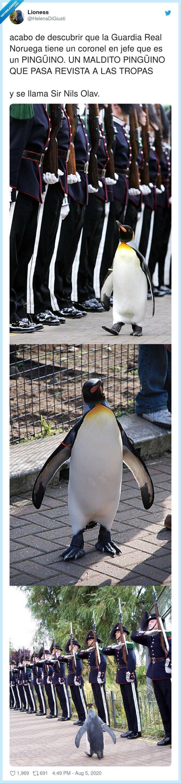 descubrir,guardia,nils,noruega,olav,pingüino,tropas