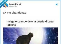 Enlace a NOOOOO gatitoooo, por @yisucrist