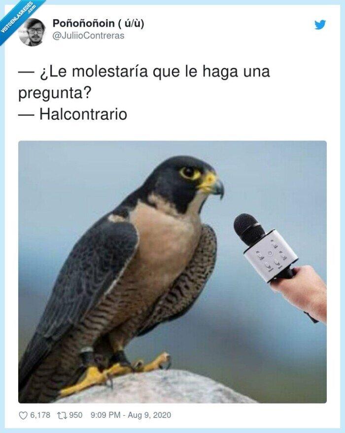 ave,halcón,halcontrario,molestar,pregunta