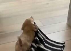 Enlace a Nunca un perrito me había representado tanto, por @GalileaEa_Ea