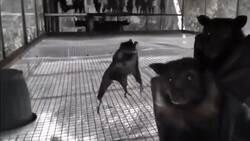 Enlace a Los murciélagos poniéndose ciegos de covid, por @ArOiCa
