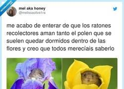 Enlace a Te quiero ratocito que se duerme en flores, por @melissaolive1ra