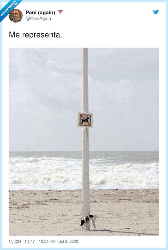 mear,perro,rebelde.,señal