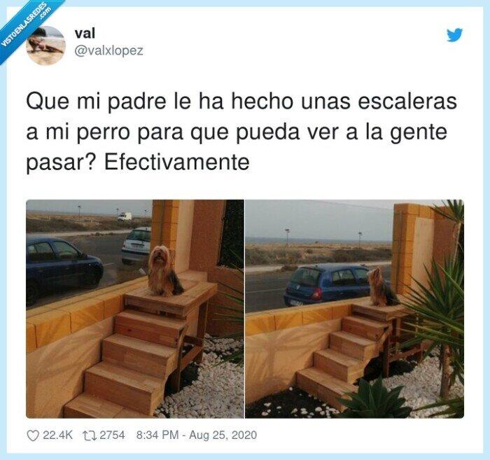 cotilleo,escaleras,padre,perro