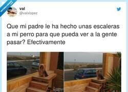 Enlace a SÍ rotundo a fomentar el cotilleo canino, por @valxlopez