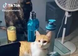 Enlace a Te quiere gatito que odia el brócoli, por @carlos_dhd