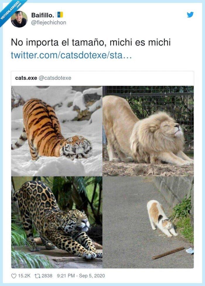 estirarse,felino,gatos,guepardo,leones,tigres
