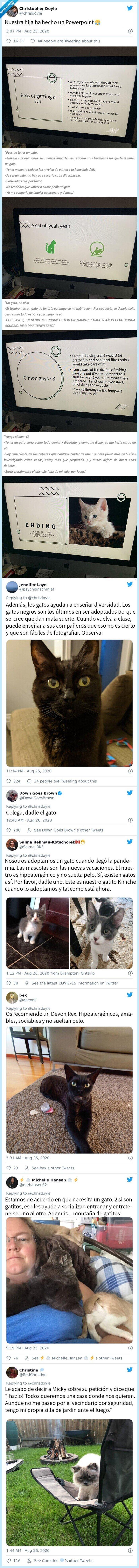 gato,hija,petición,powerpoint