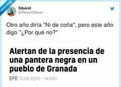 Enlace a Sí, es un año de cocodrilos en el Pisuerga, panteras negras en pueblos de Granada, por @SiberetSiberet