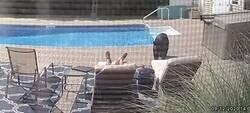 Enlace a Un hombre se lleva el susto de su vida al ser despertado por un oso que se había colado en la piscina de su casa