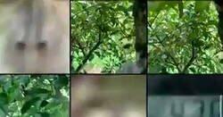Enlace a Zackrydz Rodzi encontró el móvil que le habían robado y alucinó al ver que el ladrón era un mono que se lo había pasado en grande haciéndose estos selfies