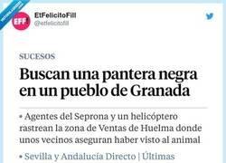 Enlace a La pantera de Granada resultó ser un gato, por @etfelicitofill