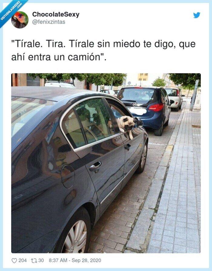 aparcamiento,copiloto,perro