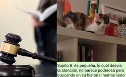 Enlace a El juicio a dos gatos por liársela parda a su dueña que ha cautivado Twitter , por @Watoreon