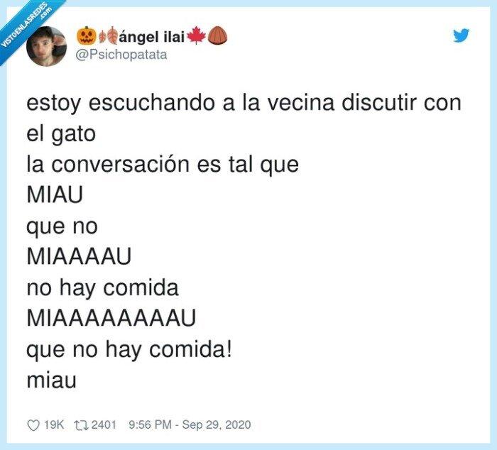 conversación,diálogo,gatos,miau