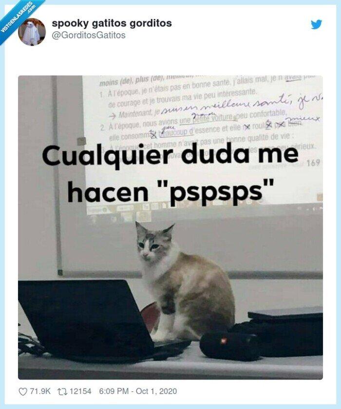 clase,gato,profesor,pspsps