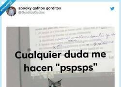 Enlace a Ojala tener al profesor gato en clase, por @GorditosGatitos