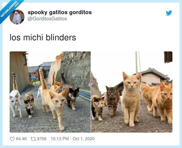 blinders,gatos,michi,peaky