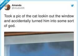 Enlace a ¿Necesitáis más pruebas de que los gatos van a dominar el mundo?, por @cloudcat28