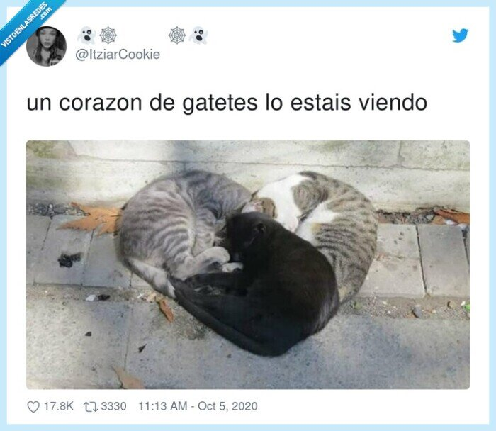 corazon,gatos