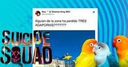 Enlace a Un ejército de pájaros liberadores protagonizan la historia viral más alucinante de la semana, por @nouledgecos