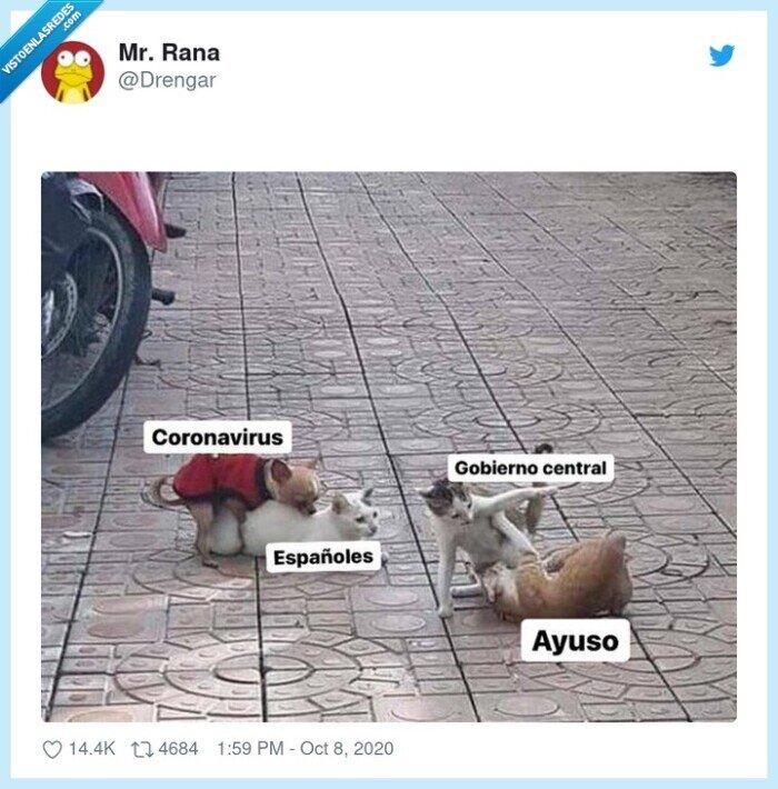 ayuso,calle,gatos,gobierno,perro,reflejo