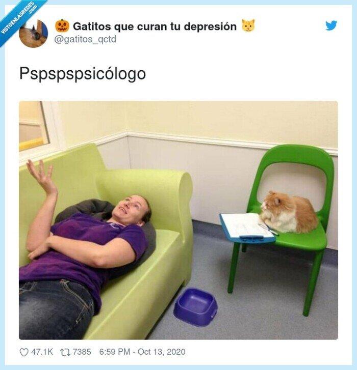 gato,psicólogo,pspspspsicólogo,terápia