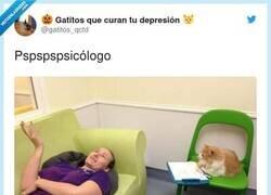 Enlace a El único que me entiende, por @gatitos_qctd