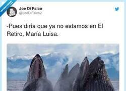 Enlace a Pues resulta que al final los de Madrid sí que tenían una manera de salir, por @JoeDiFalco2