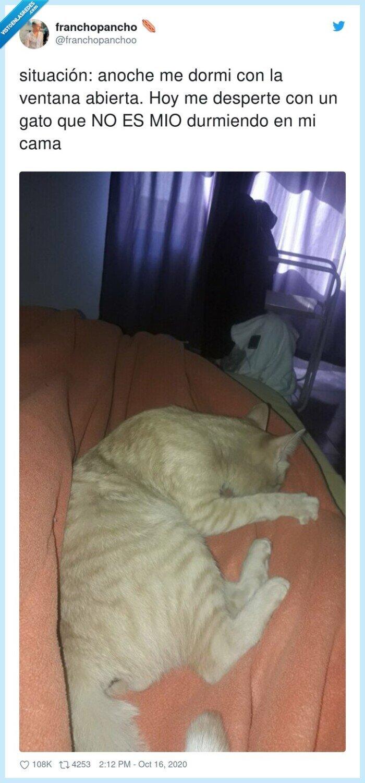 abierta,durmiendo,gato,situación,ventana
