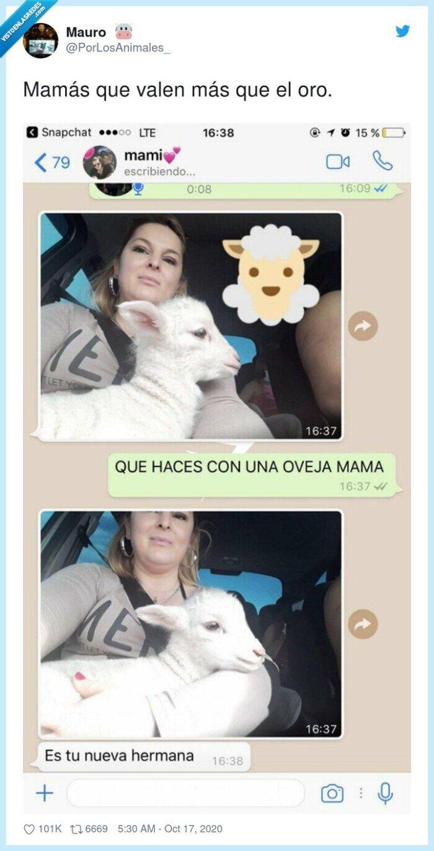familia,hermana,mamá,oveja
