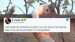 Enlace a Conquista Twitter mostrando cómo él y un gato callejero se dan los buenos días cada mañana con total naturalidad