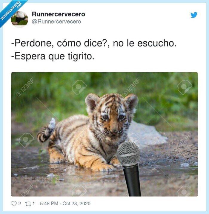 tigre,tigrito