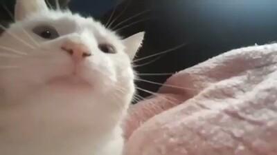 726932 - Este gato que mueve la cabeza al ritmo de la música se ha convertido en el nuevo ídolo de Internet: encaja con cualquier canción y estilo musical